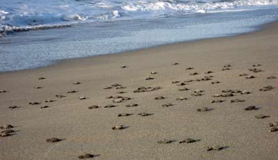 Turtles on the beach